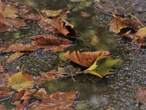 Po víkendu se silně ochladí, v listopadu přijdou i srážky