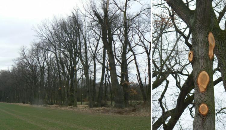Firma z Budějc ořezávala stromy, od inspekce životního prostředí dostala pokutu