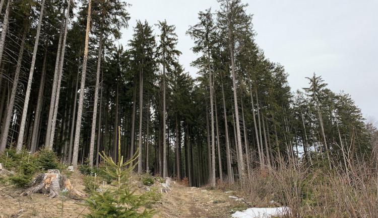Lesy České republiky chtějí více těžit kůrovce na Boubíně, Hnutí Duha je proti