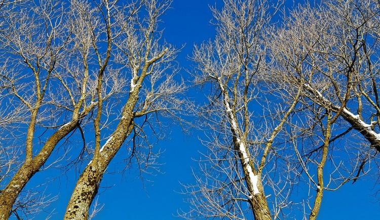 Kvůli výstavbě teplovodu pokácí město několik stromů. Jako náhradu vysadí nové