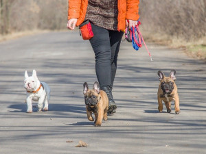 Poplatek ze psů budou od nového roku platit všichni pejskaři. Sazba by ale měla být nižší