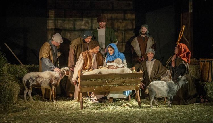 Neznámý pachatel podřízl kozu v živém betlémě, z místa ji odnesl