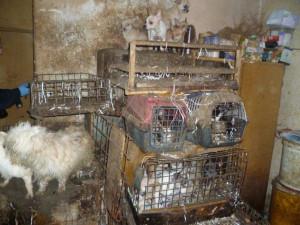 Soudy budou moci uložit zákaz chovu zvířat až na deset let