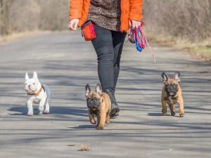 Volně pobíhající pes v Průběžné ulici ohrožuje lidi i ostatní zvířata, majiteli hrozí stotisícová pokuta