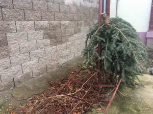 Svoz vánočních stromků začne 2. ledna, plné kontejnery budou vyváženy operativně