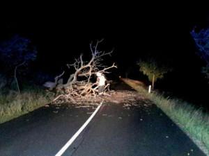 Kvůli popadaným stromům je uzavřena silnice I/4 na Prachaticku