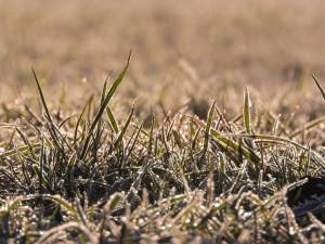 Výrazná změna počasí v Česku se nečeká. Pokud bude mrznout, tak mírně