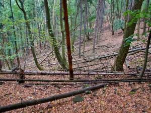 Kvůli polomům nemohou lidé na turistické trasy kolem hory Kleť