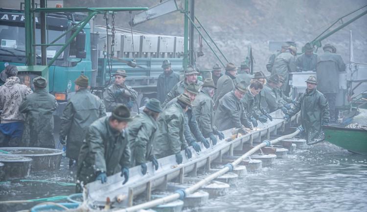 Třeboňští rybáři zahájili jarní výlovy dřív, pomohlo teplé počasí