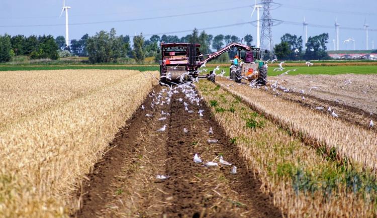 Jihočeským zemědělským podnikům chybí 11 procent zaměstnanců