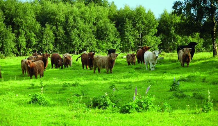 Soutěž o nákup kvalitního BIO hovězího masa z Novohradských hor a České Kanady