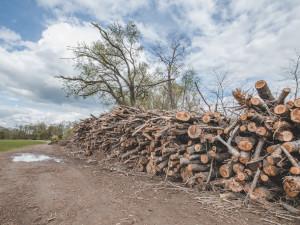 Podél Vltavy se v Boršově vykácely desítky stromů. Podle Povodí Vltavy šlo o nebezpečné dřeviny