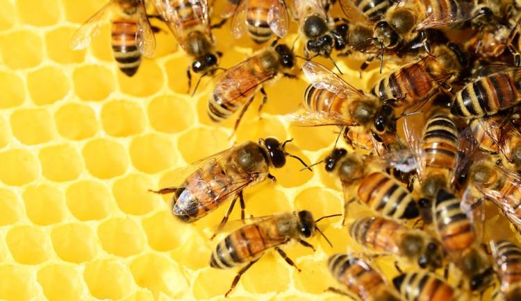 Včelaře čeká těžký rok. Jihočeský kraj je podpoří částkou přesahující milion a půl