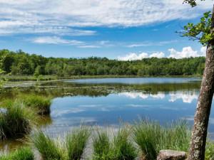 Voda na Orlíku a ve Staňkovském rybníce není vhodná ke koupání, problémem jsou sinice