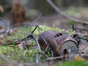 Šumava se potýká s neukázněnými turisty, chodí mimo vyznačená místa a odhazují odpadky