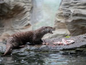 Jihočeský kraj pomůže zoologickým zahradám v regionu, přispěje částkou 400 tisíc korun