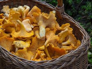 I přes deště a vysoké teploty zatím houby tolik nerostou