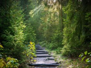 Vyrážíte do přírody? Pohyb v lese má svá jasná pravidla