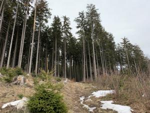 Demonstranti ve Vimperku chtěli pro prales Boubín více zásahů