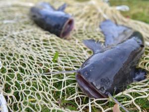 Panská ulice bude o víkendu patřit rybám