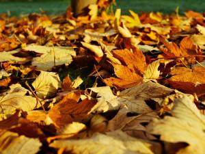 Listopad bude spíš teplejší, ale ke konci přinese i sníh