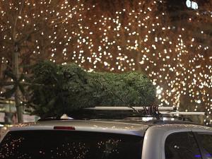 Řetězce zahajují prodej vánoční stromků. Letos je můžete koupit i online