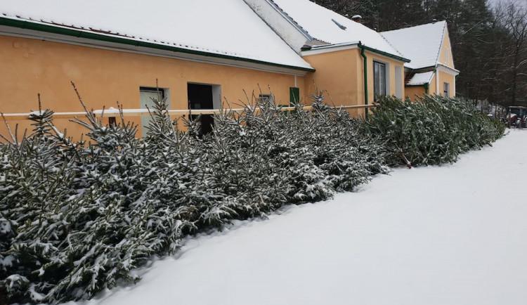 Nevíte kde pořídit vánoční stromek? Prodej u Lesů města Písku je již tradicí