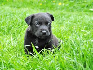 Od dneška nelze prodávat psa ve zverimexech a na veřejných místech