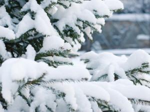 Konec ledna bude teplý. V únoru se má ale znovu ochladit a sněžit