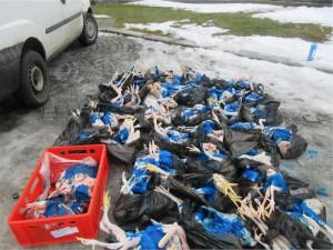 Cizinec převážel v dodávce čtvrt tuny neznámého masa. Teď mu hrozí vysoká pokuta