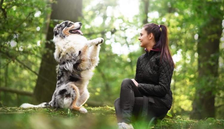 Každý pejsek jde vycvičit. Základem je pozitivní metoda, radost je pak společná, říkají trenérky Online psí školy