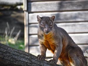 Otevřete venkovní areály, neexistuje žádný smysluplný důvod k uzavření, vyzývá ředitel táborské zoo v petici