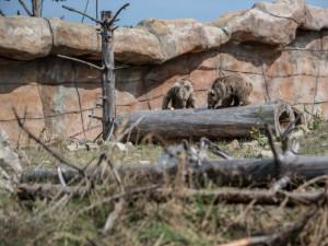 Zoologické zahrady na jihu Čech se chystají na otevření. V pondělí otevře Tábor i Hluboká