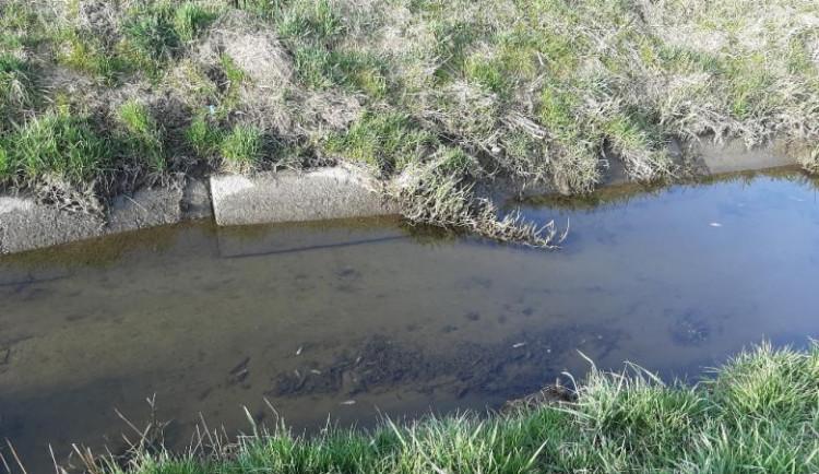 Desítky ryb na Jindřichohradecku otrávil saponát z mytí auta