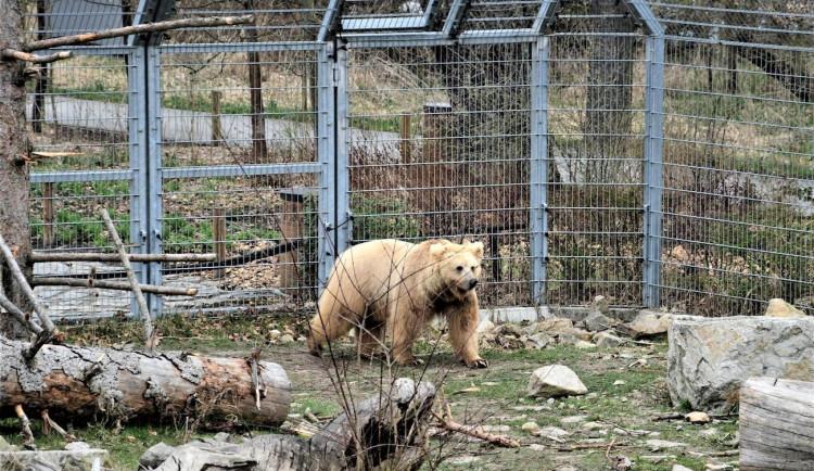 Jihočeská zoologická zahrada v Hluboké nad Vltavou má opět otevřeno