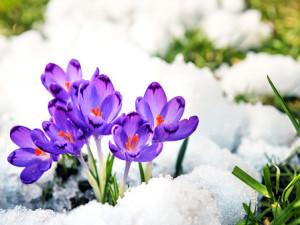 Poslední týden mrazu a sněhu. V dalších týdnech půjdou stupně pozvolna nahoru