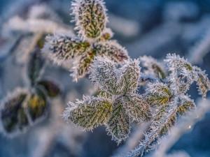 V noci může v Česku mrznout. Meteorologové vydali výstrahu