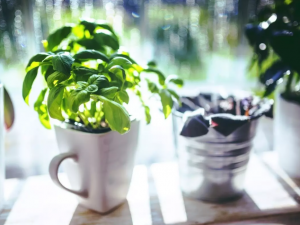 Uvadají vám zasazené bylinky? Oživit je můžete i bez použití chemie