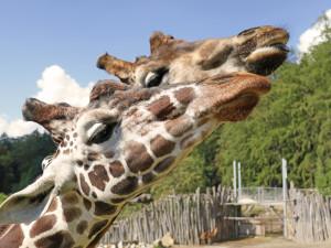 Zoo se znovu otevřela. Na návštěvníky se těšila i zvířata