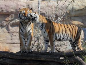 Zoo Hluboká je otevřena