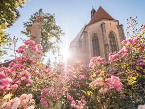 Blatná je opět městem růží  a zve v sobotu 3. července na letošní výstavu