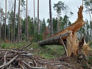 Lesní správa Jindřichův Hradec má v lesích polomy po bouřkách, nemá se do nich chodit