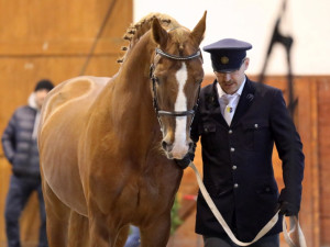 Policie ve Zlínském kraji bude mít nové koně, kteří v Písku dokončili výcvik