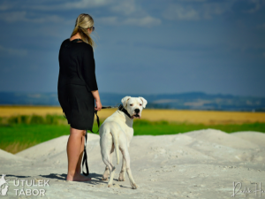 Anubis hledá novou rodinu. Je to unikátní pes s charakterem, který miluje procházky