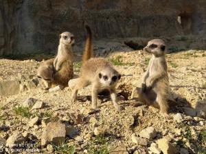 Zoo na jihu Čech mají letos zatím vyšší návštěvnost než loni