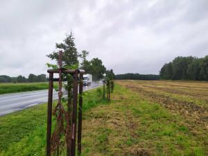 Nově vysazené lípy u Blatné polámali vandalové. Zničením 54 stromů způsobili škodu 350 tisíc