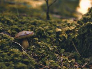 Podmínky na jihu Čech zatím příliš nepřejí růstu hub