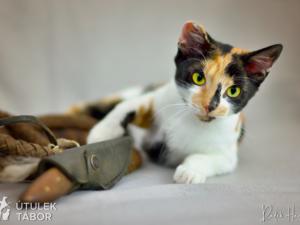 Kočičí princezna Fantagiro hledá nový domov