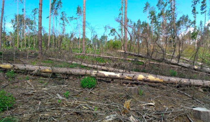 V jižních Čechách se za pět let vykácelo přes 22 tisíc hektarů lesa