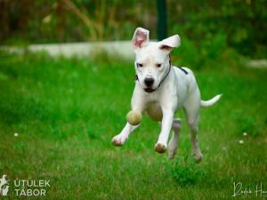 Mladá fenka argentinské dogy hledá nový domov. Nechbet miluje mazlení a chce poznávat svět
